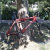 Fat Cycles Project AMS, CC-Fully, sehr guter Zustand