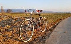 Continental Singlespeed Urban City Custom Bike Fahrrad aus gutem alten Stahl;-)