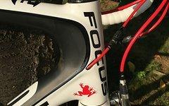 Focus Rennrad Focus Izalco Carbon SRAM Red 10-fach, RH 58