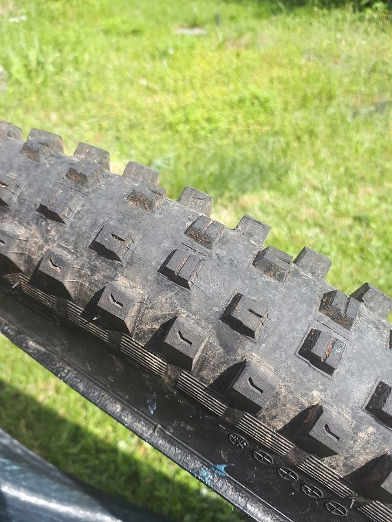 Specialized Hill Billy GRID 29 x 2.6