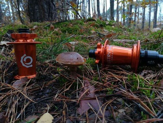 Industry Nine Hydra | Newmen EG 30/35 | Hexenwerk | (Non)Boost | Enduro | Gravity